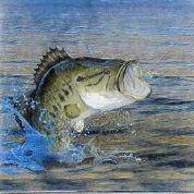 Luncheon Fishin Napkin