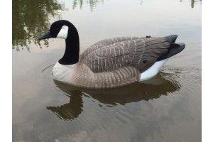 Canadian Goose Decoy
